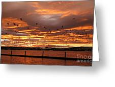 Sunset In Tauranga New Zealand Greeting Card by Jola Martysz