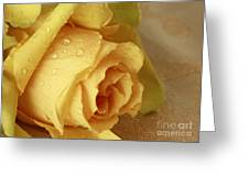 Sunshine Delight Yellow Rose Greeting Card by Inspired Nature Photography By Shelley Myke