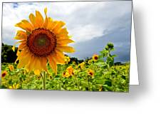 Sunshine On A Cloudy Day Greeting Card by AnnaJo Vahle