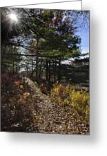 Sunshine Pathway Landscape Greeting Card by Christina Rollo