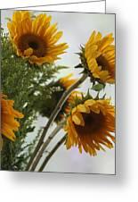 Sunshine Greeting Card by Paula Rountree Bischoff