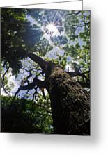 Sunshine Through The Trees Greeting Card by Matt Radcliffe