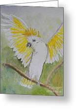 Suphar Crested Cockatoo Greeting Card by Pamela  Meredith