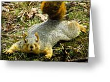 Surprise Mister Squirrel Greeting Card by Shawna Rowe