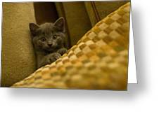 Surprised Kitten Greeting Card by Matt Radcliffe
