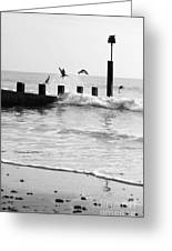 Surprised Seagulls Greeting Card by Anne Gilbert