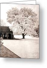 Surreal Dreamy Ethereal Winter White Sepia Infrared Nature Tree Landscape Greeting Card by Kathy Fornal