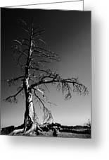 Survival Tree Greeting Card by Chad Dutson