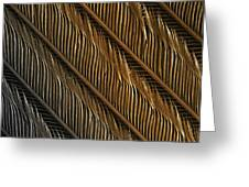 Swallow Feather Detail, Sem Greeting Card by Power And Syred