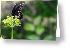 Swallowtail Butterfly Greeting Card by Lorri Crossno