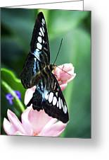 Swallowtail Butterfly Greeting Card by Marilyn Hunt