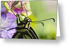 Swallowtail Butterfly Greeting Card by Priya Ghose