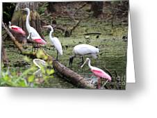 Swamp Flock Greeting Card by Theresa Willingham