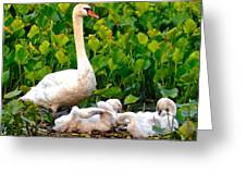 Swan Song Greeting Card by Frozen in Time Fine Art Photography