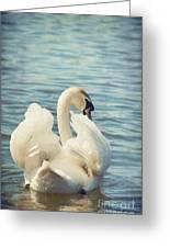 Swan Greeting Card by Svetlana Sewell