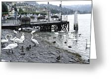 Swans And Ducks In Lake Lucerne In Switzerland Greeting Card by Ashish Agarwal