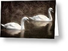 Swans For Life Greeting Card by Jason Green