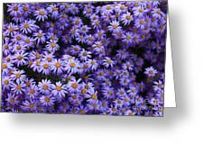Sweet Dreams Of Purple Daisies Greeting Card by Carol Groenen
