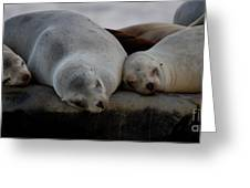 Sweet Dreams Seals Greeting Card by Ruth Jolly