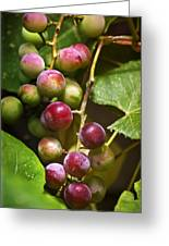 Sweet Grapes Greeting Card by Christina Rollo