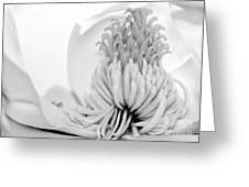 Sweet Magnolia Greeting Card by Sabrina L Ryan