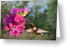 Sweet Pea Hummingbird Greeting Card by Debbie Portwood