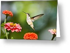 Sweet Promise Hummingbird Greeting Card by Christina Rollo