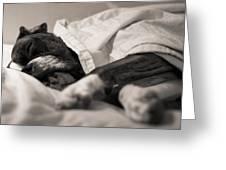 Sweet Sleeping Boxer Greeting Card by Stephanie McDowell