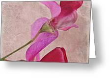 Sweet Textures 2 Greeting Card by John Edwards