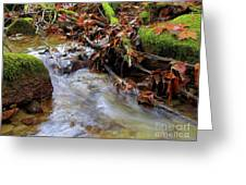 Swept Away Greeting Card by Sharon  Talson