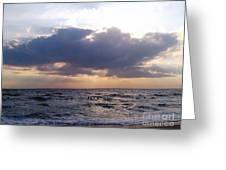 Swim Before Storm Greeting Card by Patrick Mancini
