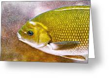 Swimming Fish  Greeting Card by Artist and Photographer Laura Wrede