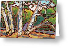 Sycamores Greeting Card by Nadi Spencer
