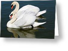 Synchronized Swans Greeting Card by Carol Groenen