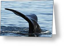 Tailfin Of Southern Right Whale In Water Greeting Card by Sami Sarkis
