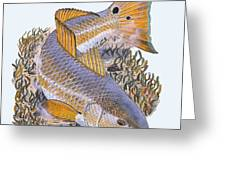 Tailing Redfish Greeting Card by Carey Chen