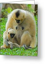 Taking Care Of Junior Greeting Card by Ashley Vincent
