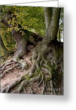 Taking Root Greeting Card by Heiko Koehrer-Wagner