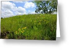 Tall Grass Hillside Greeting Card by Scott Kingery