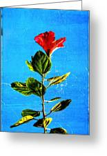 Tall Hibiscus - Flower Art By Sharon Cummings Greeting Card by Sharon Cummings
