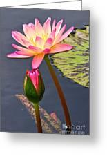 Tall Waterlily Beauty Greeting Card by Byron Varvarigos