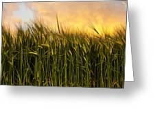 Tall Wheat Greeting Card by Svetlana Sewell