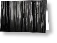 Tangled Greeting Card by Antonio Jorge Nunes