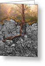 Taproot Greeting Card by Mary Jo Allen