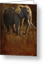 Tarangire Bull 2 Greeting Card by Aaron Blaise