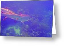 Tarpon Reef Greeting Card by Carey Chen
