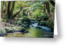 Tasmanian Rainforest Greeting Card by Matteo Colombo