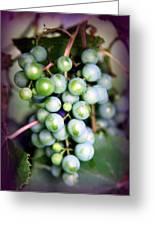 Taste Of Nature Greeting Card by Karen Wiles