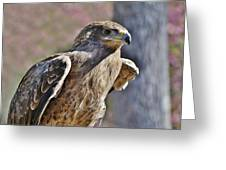 Tawny Eagle Greeting Card by Paulette Thomas