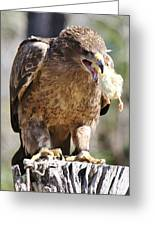 Tawny Eagle With His Prey Greeting Card by Paulette Thomas